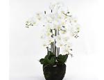 https://sklep.hydroponika.pl/Ro%C5%9Bliny_i_kwiaty_sztuczne/storczyki/5355-Phalenopsis_w_b%C5%82ocie_92_cm_bia%C5%82o-kremowa.html - zdjęcie 1