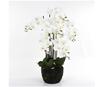 https://sklep.hydroponika.pl/Ro%C5%9Bliny_i_kwiaty_sztuczne/storczyki/5355-Phalenopsis_w_b%C5%82ocie_92_cm_bia%C5%82o-kremowa.html